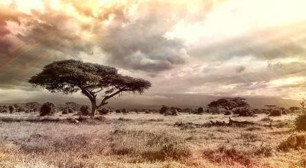 africa-944465__480