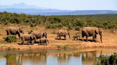 Africa elephant-279505__340