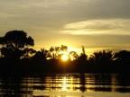 Amazon jungle for UTN-1329987