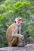 monkey-2130621__340