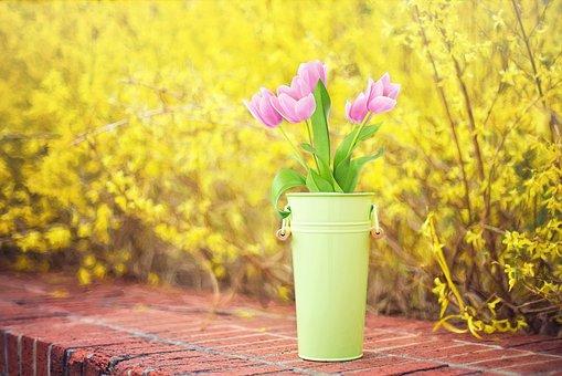 spring-flowers-2222879__340